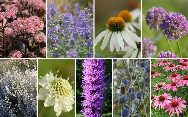 Ein Fest für Bienen und Schmetterlinge - 12er-Kollektion