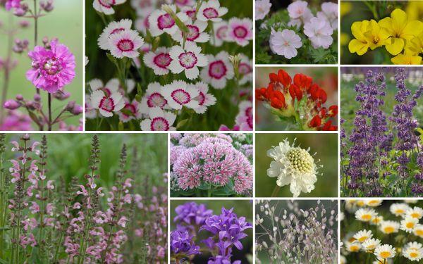 Poetische Blumenwiese f. mager-trockene Standorte - 12er Kollektion