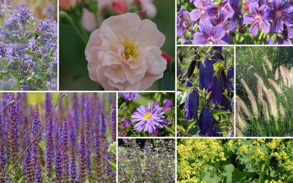 Staudenblau & Rosenpracht // Cornelia [11er, gf] - Gartenflora 19-05