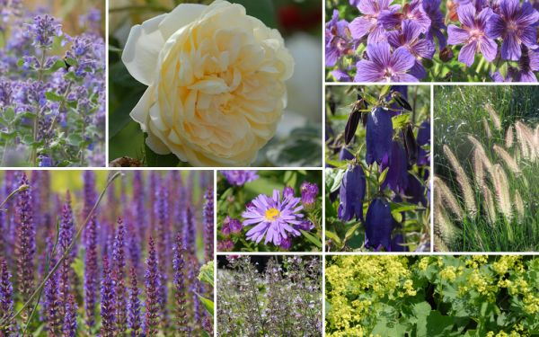 Staudenblau & Rosenpracht // Yellow [11er, gf] - Gartenflora 19-05