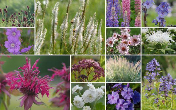 Einfach mal anders // Üppige Blütenf. [14er, gf] - Gartenflora 19-04
