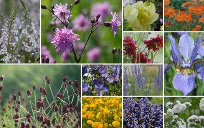 Poetische Blumenwiese f. gute, frische Gartenböden - 12er-Kollektion
