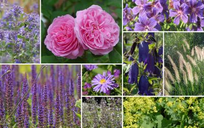 Staudenblau & Rosenpracht // Gertrude [11er, gf] - Gartenflora 19-05