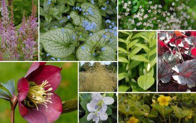 Streifenbeet // halbschattig [16er, gf] - Gartenflora 19-06