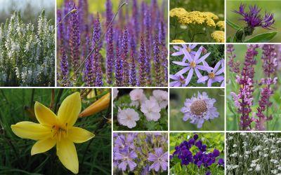 Streifenbeet // sonnig [16er, gf] - Gartenflora 19-06