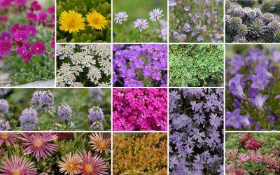 Kleine Ballen für Ritzen und Fugen [36er, gf] - Gartenflora 20-06