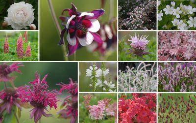 Edel und frisch [15er, gf] - Gartenflora 21-04