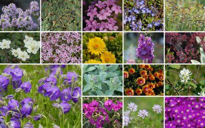 Kleine Pflanzen - große Wirkung [17er-Set, msg] - Mein Schöner Garten 20-06